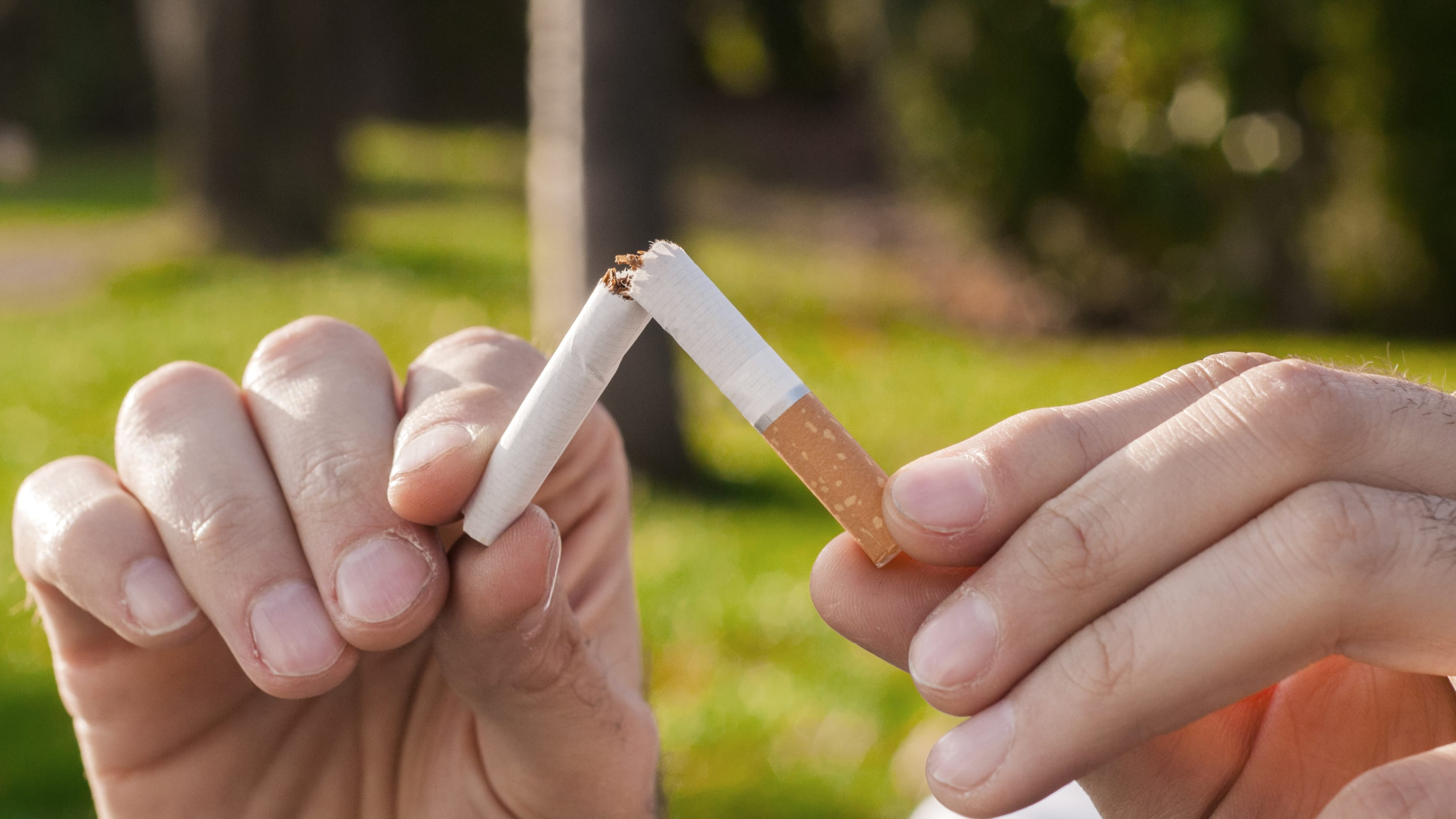 Two hands breaking a cigarette after a lung cancer screening