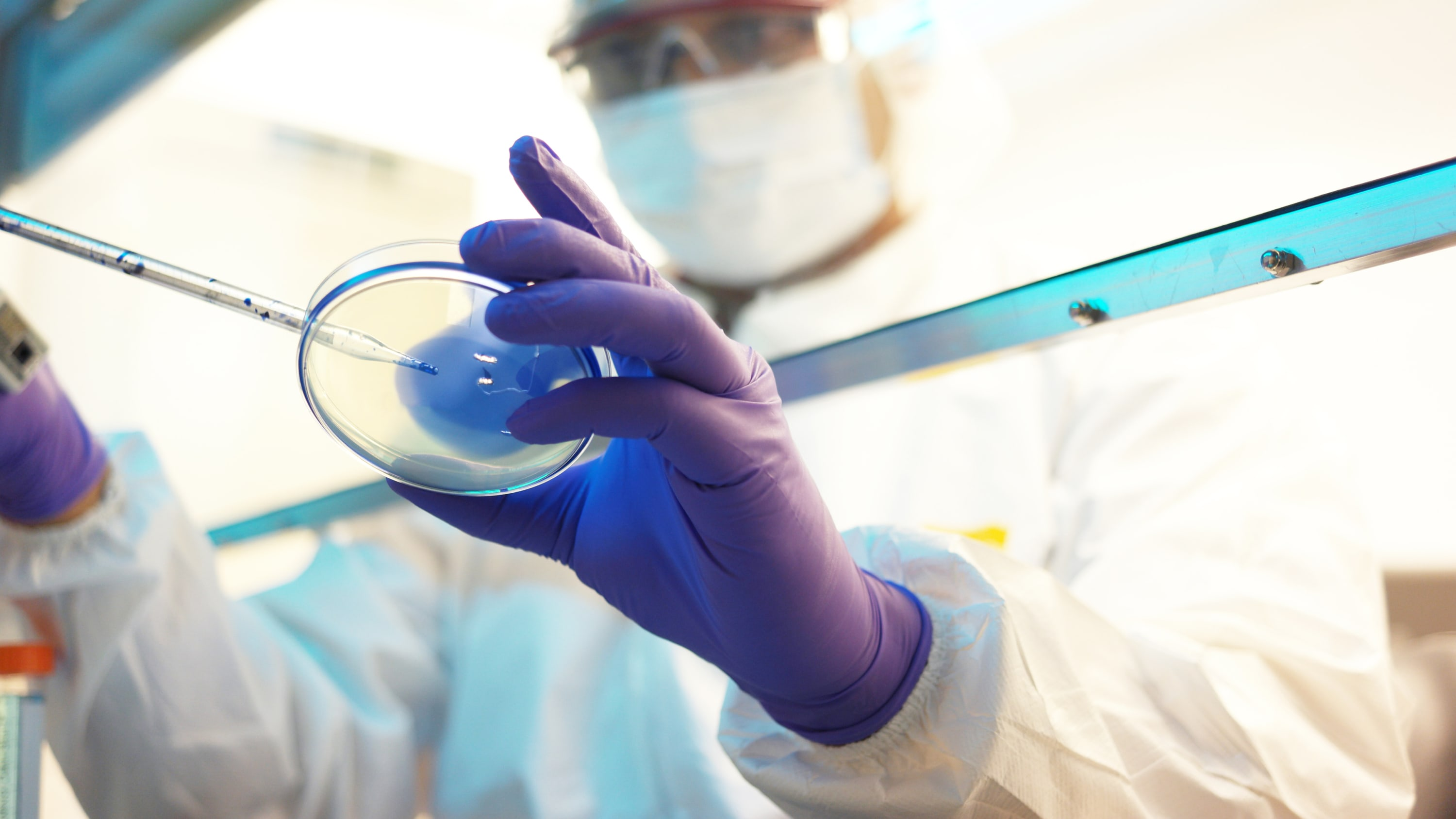 A researcher works with a Petri dish that contains MRSA, a drug-resistant microbe.