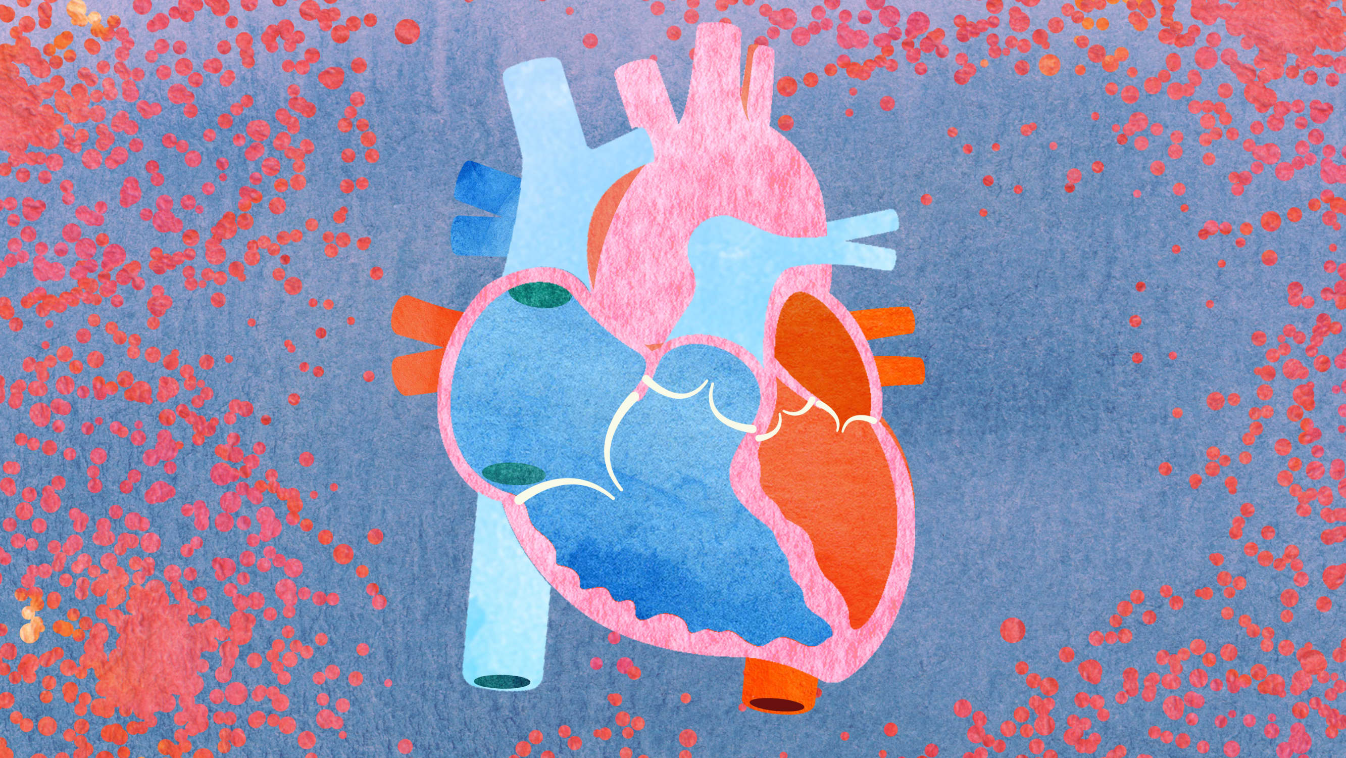 Heart illustration focusing on cardio-oncology