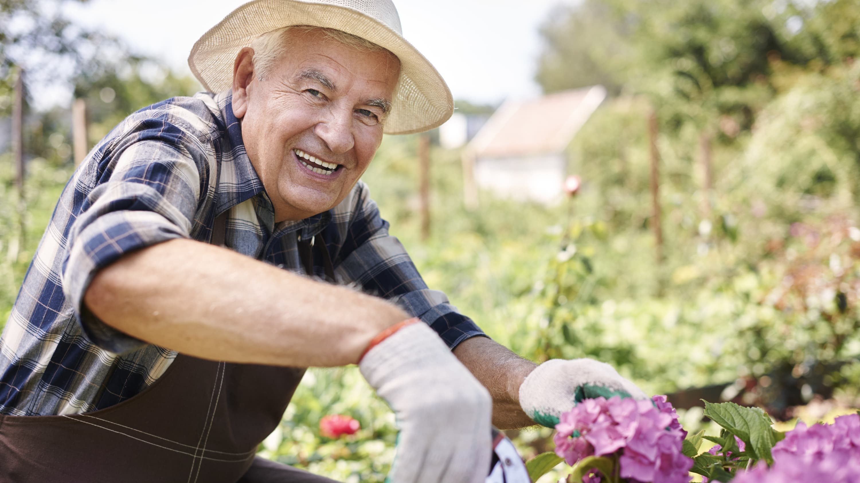 Smiling older man gardening and wearing a hat as sun protection, which could help prevent skin cancer and the need for radiation therapy later on.