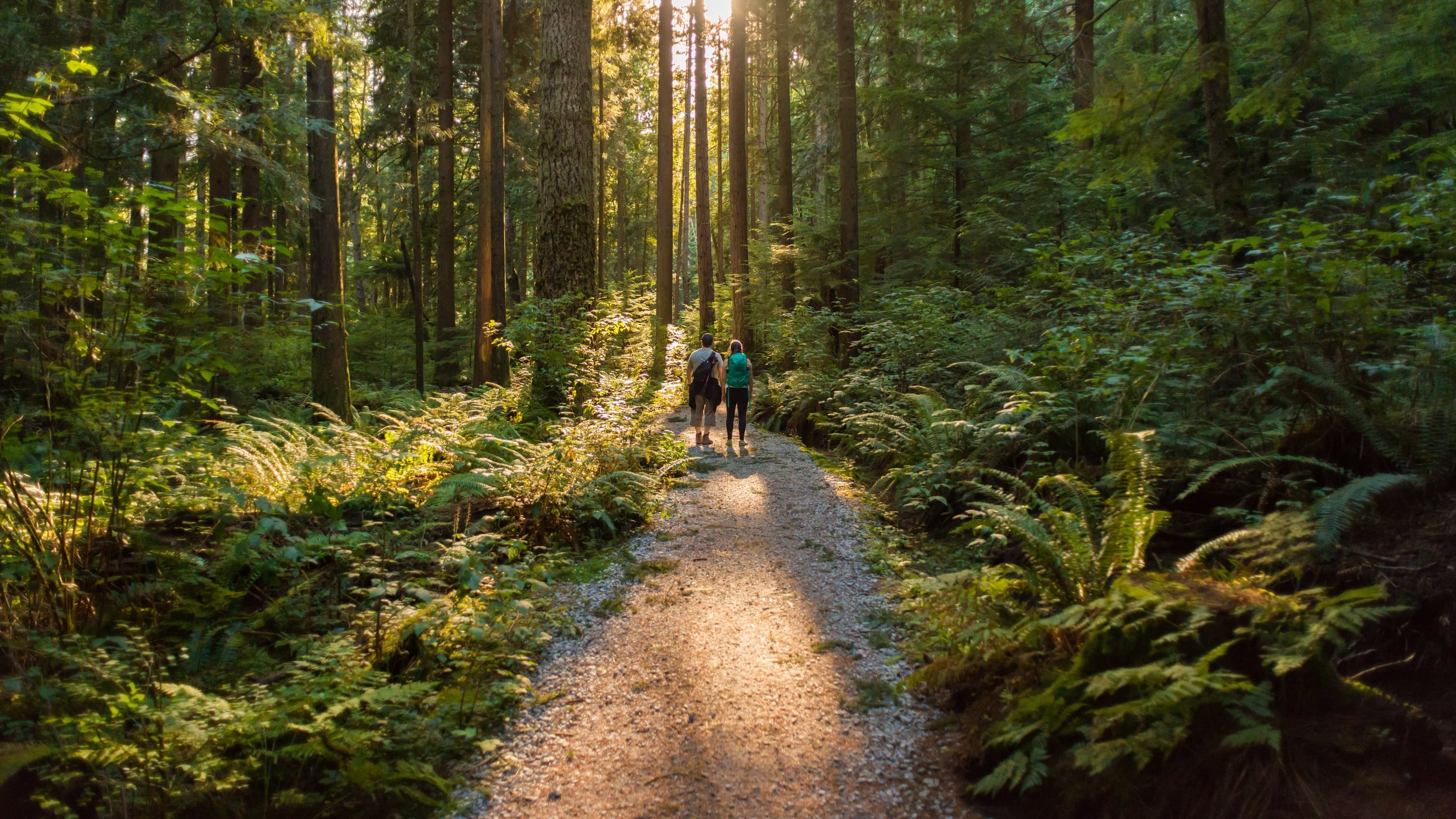 people hiking in a forest, concerned about EEE