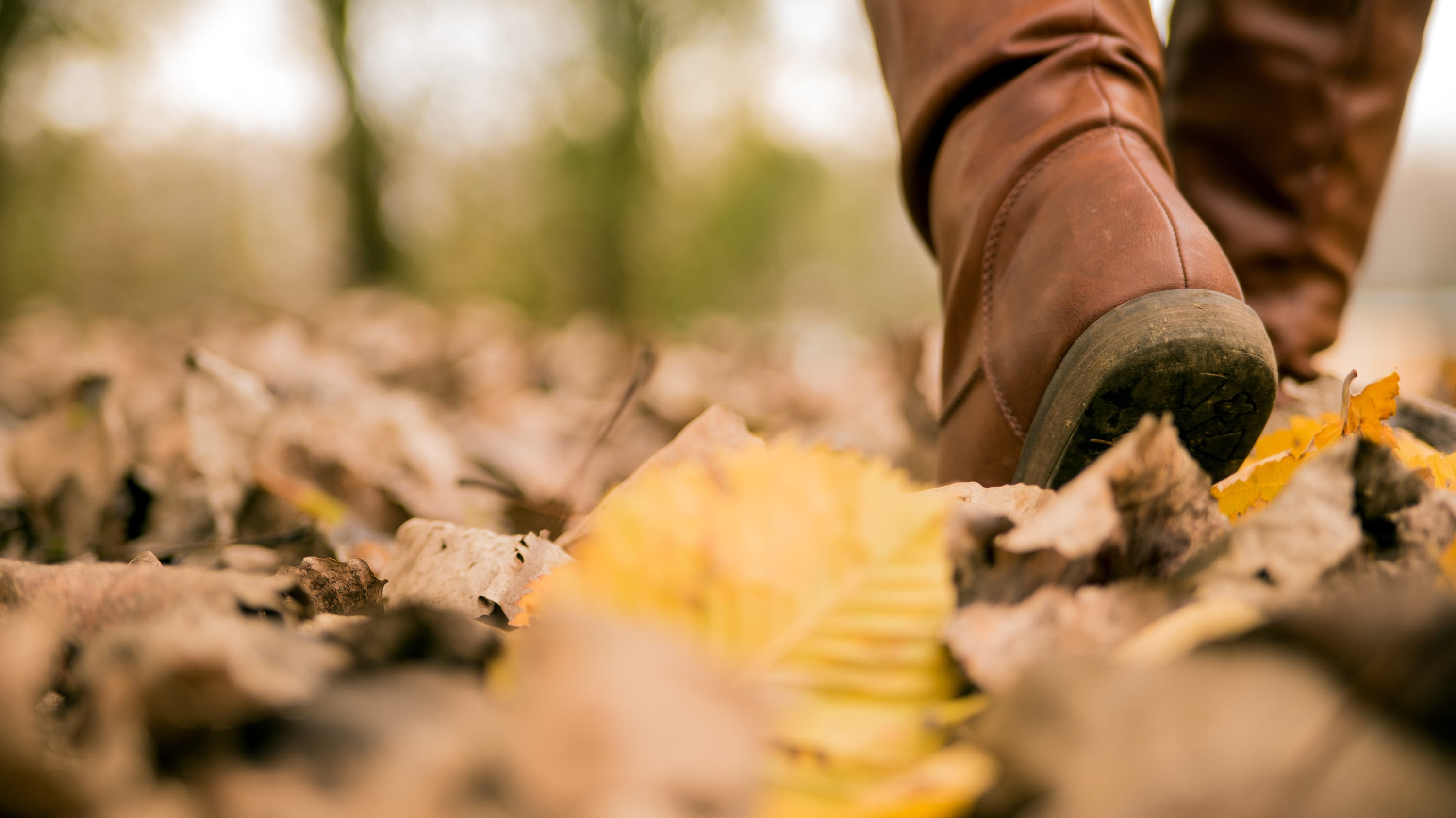 A woman's brown boot in leaves where it's possible to pick up a tick that may carry Lyme disease.