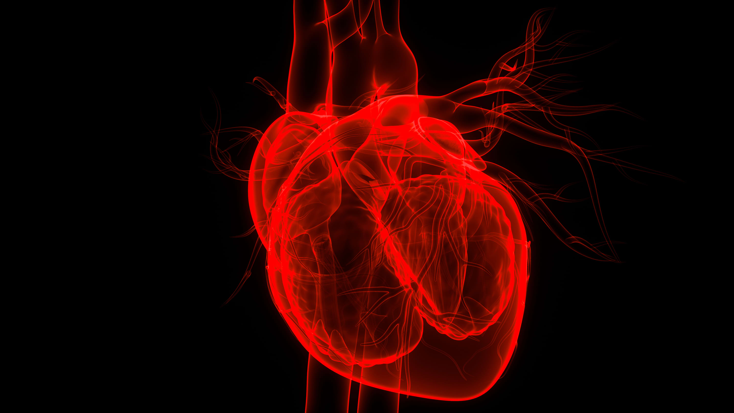 3d image of the heart