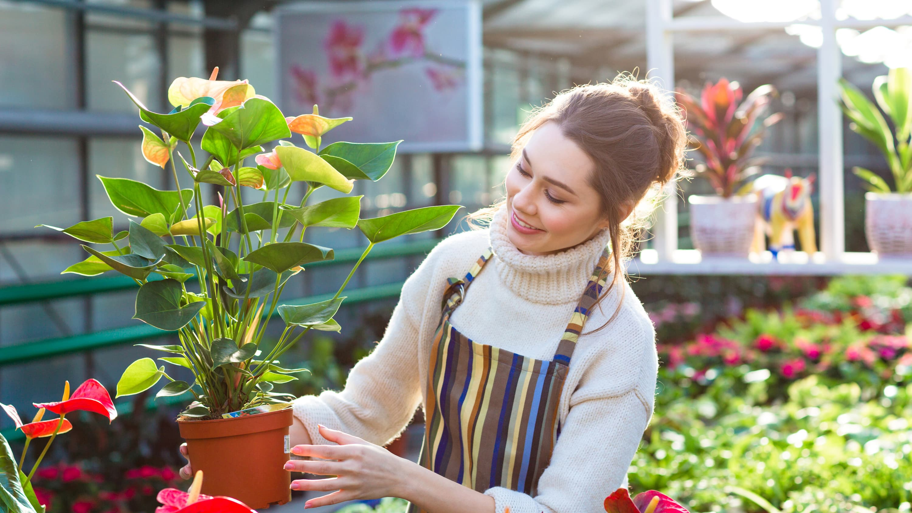 A woman is gardening with a striped apron on, she is inspecting a potted plant who could be wearing sunscreen to prevent squamous cell carcinoma