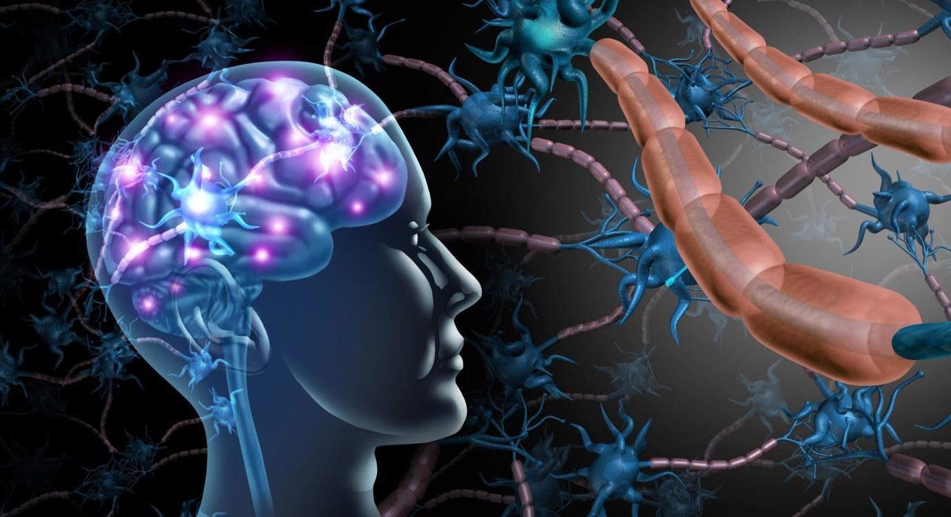 nerve cells; electrical impulse; dendrites; nerve fibres; axon; myelin