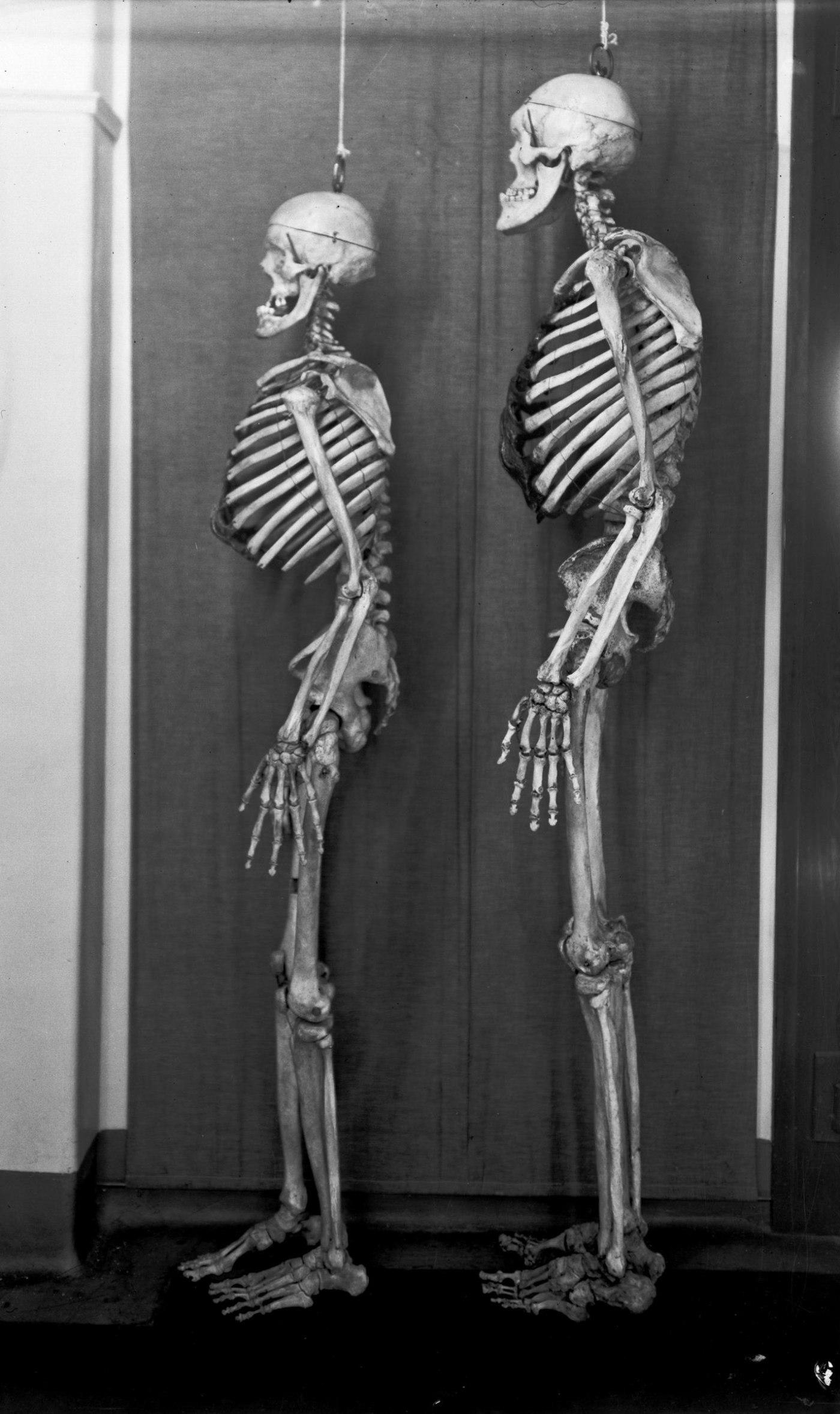 capsule-skeletons