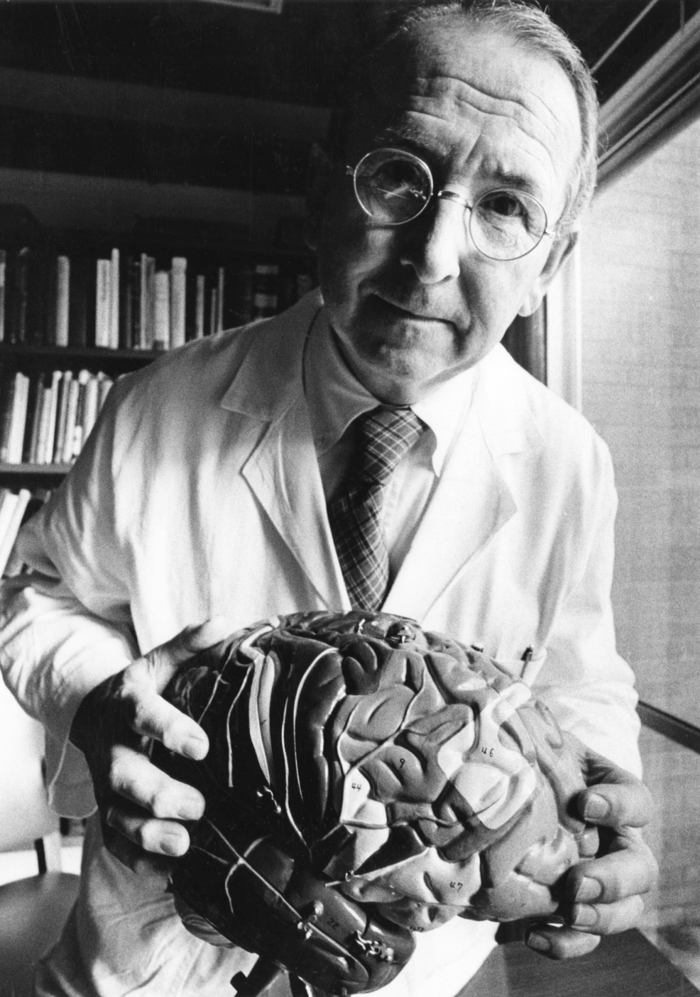 Paul MacLean believed that the neocortex was a relatively late development in the mammalian lineage, but there is now a consensus that homologues of this structure exist in simple fish, and even in insects.
