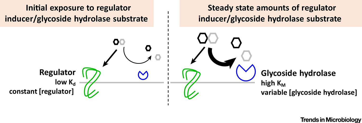 Navigating the Gut Buffet: Control of Polysaccharide Utilization in Bacteroides spp.