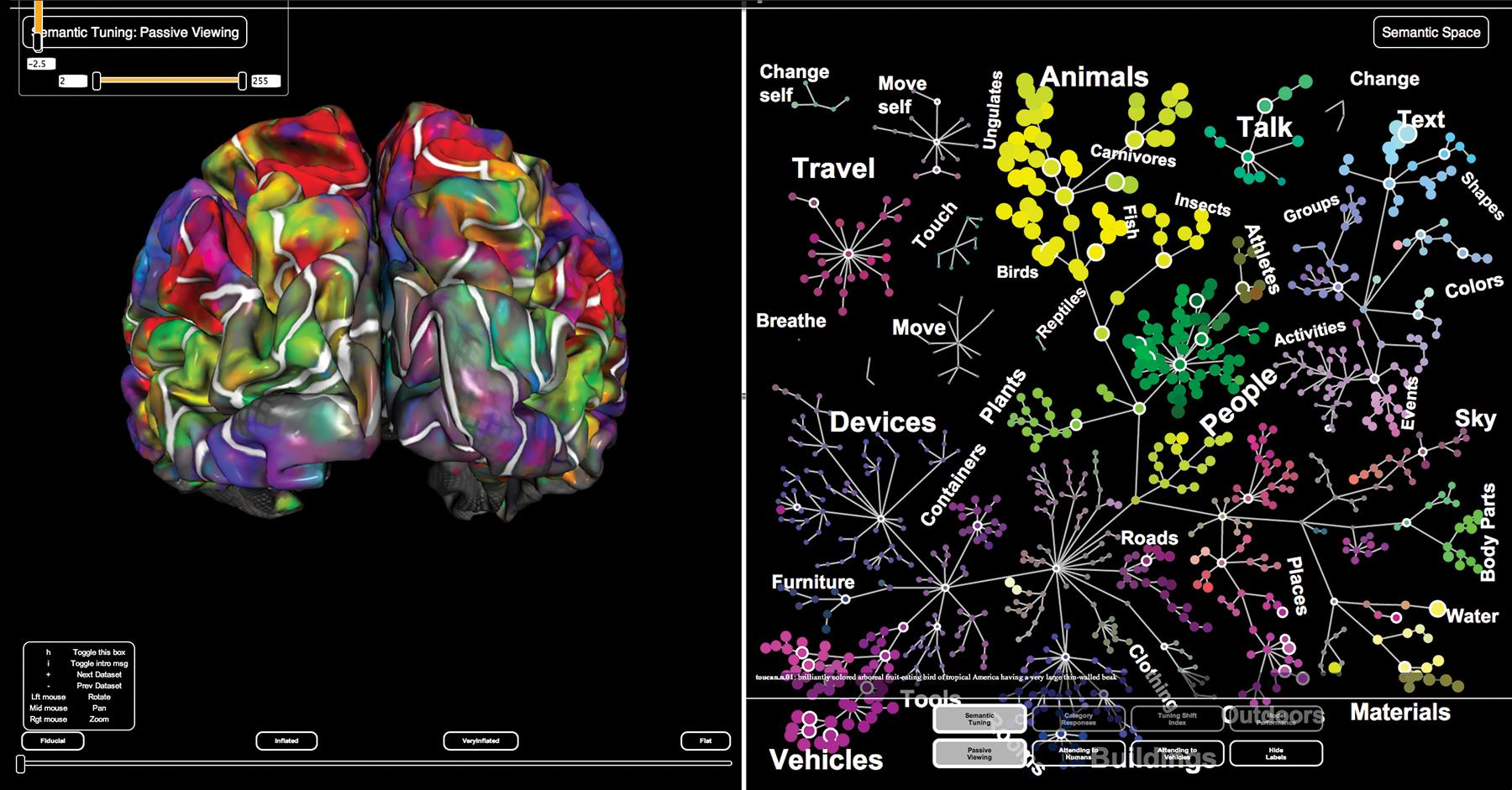 fMRI visualization