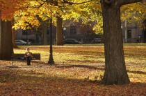 Person sitting on a bench during fall on the New Haven Green.