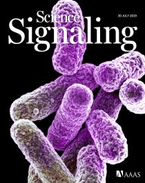 Slow growth determines nonheritable antibiotic resistance in Salmonella enterica.