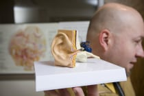 Model of Ear Anatomy