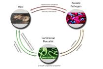 Symbiont-Pathogen-Host Relationship