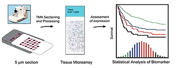 microarray-analysis