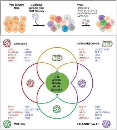 Graphical Abstract from publication in Cell