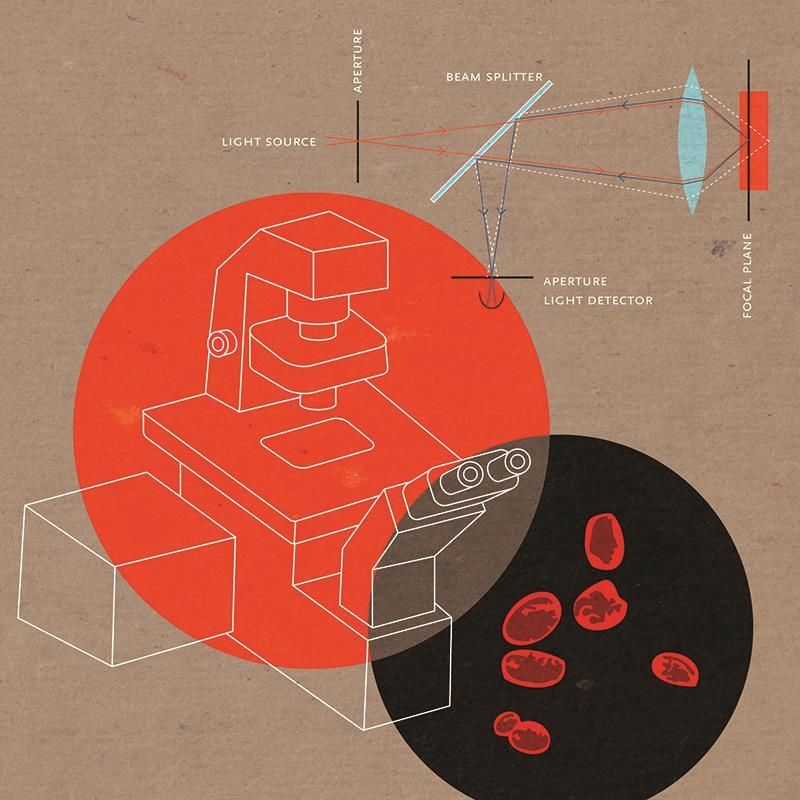 confocal-microscopy illustration
