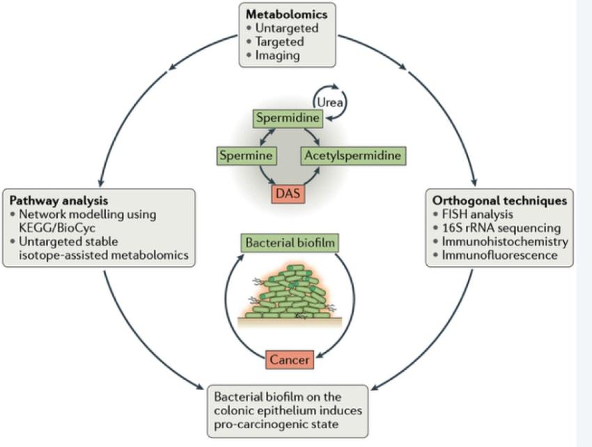 Colon Cancer Pathways Diagram