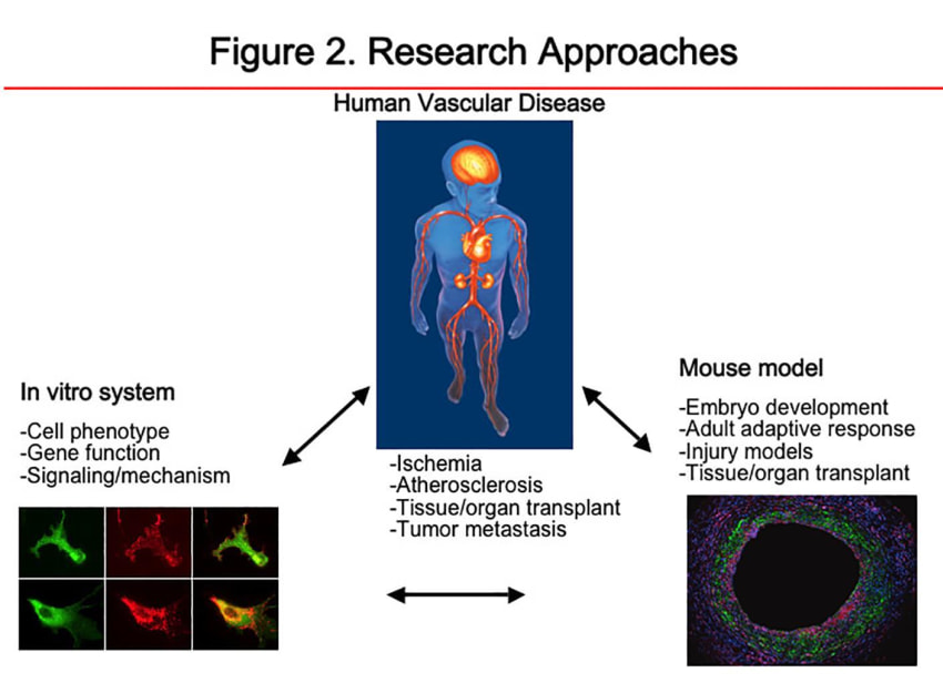 Figure 2: Research Approaches
