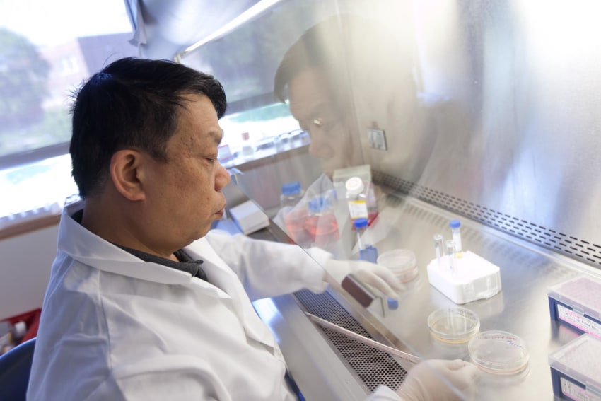 Stem Cell Culture Training Process
