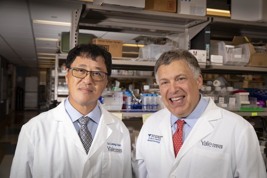 Lieping Chen, MD, PhD, and Roy Herbst, MD, PhD, are part of the lung cancer SPORE within the Section of Medical Oncology.